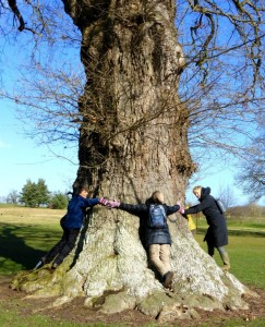 Oak tree 1400 has a girth of only six hugs